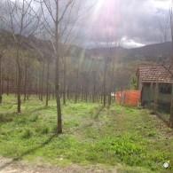 photo 3 (6)
